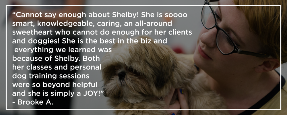 Shelby Semel New York City Dog Training :: Group Dog Training Classes