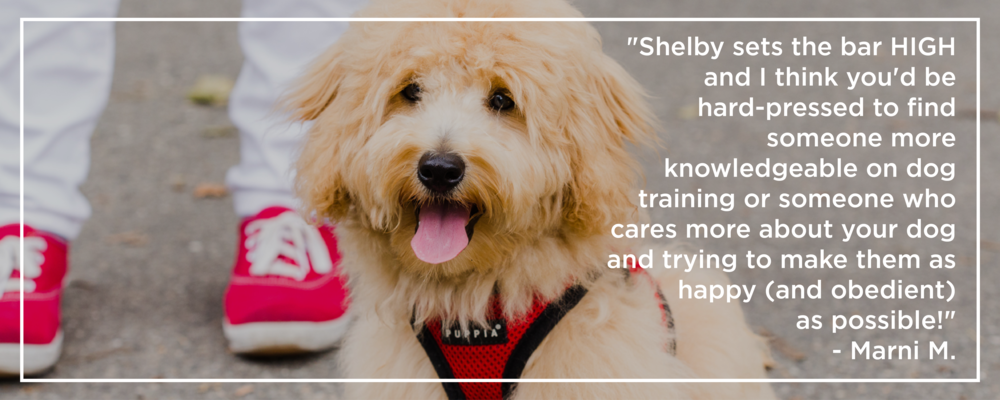 Shelby Semel Dog Training :: NYC Dog Behavior Expert and Trainer