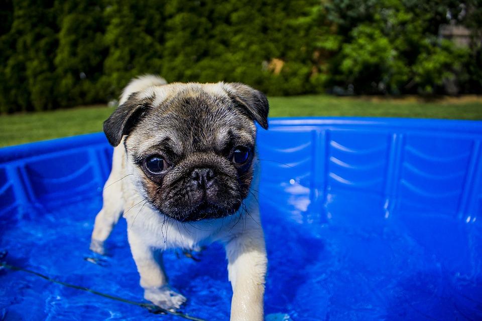 Shelby Semel Dog Training :: Hot Dog!
