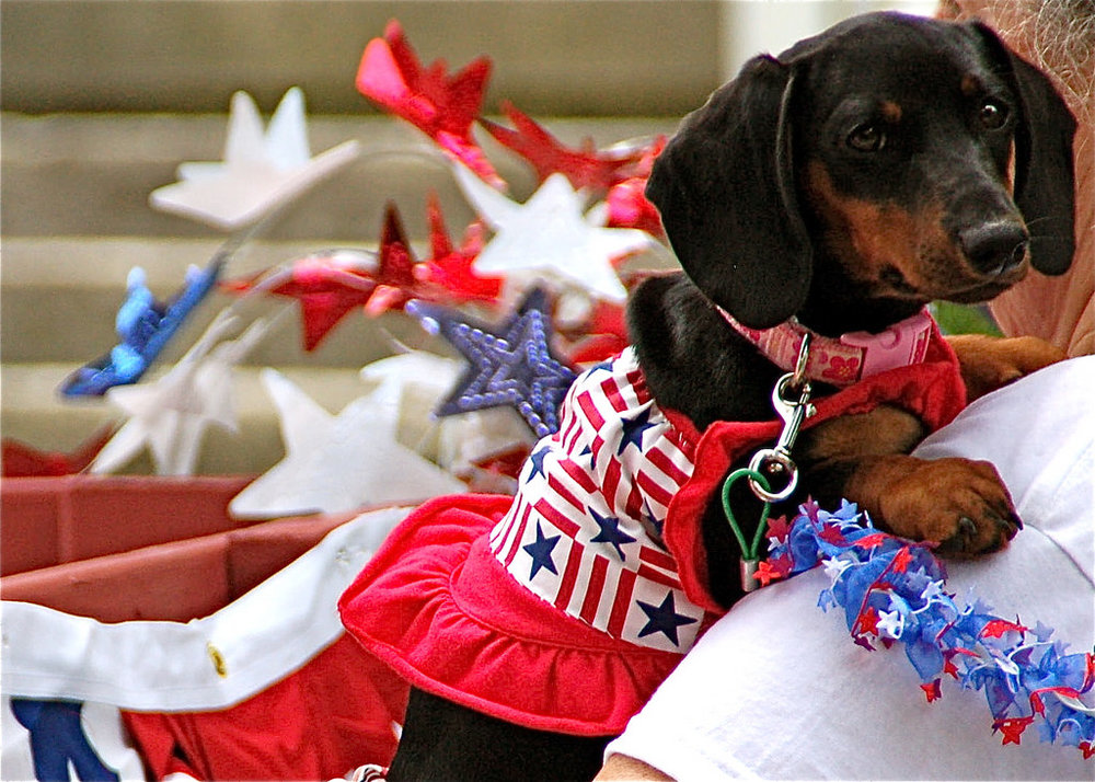 Shelby Semel Dog Training :: 3 tips for surviving the 4th of July with your dog!