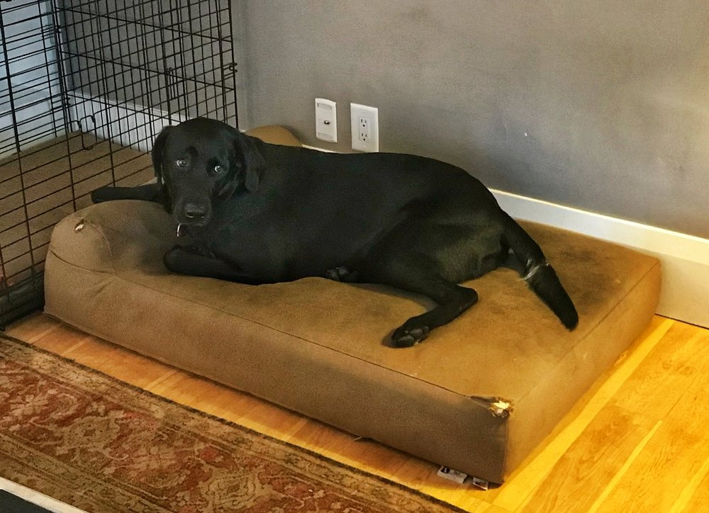 "Bailey practices Settle on his dog bed while off frame his owner ""soothes"" her crying fake baby."