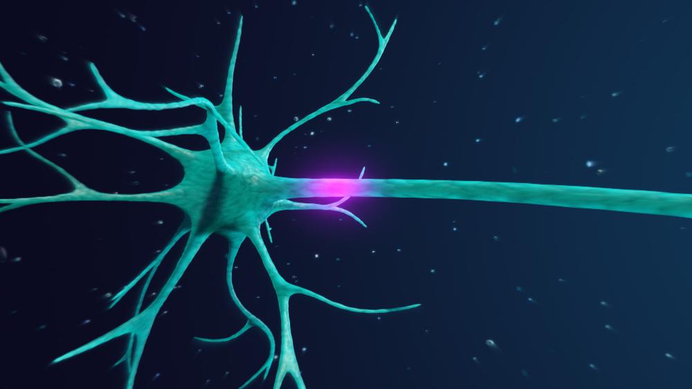 Nuestro Sistema Nervioso es tan rápido que a la información le toma menos de una décima de segundo recorrer todo nuestro organismo.