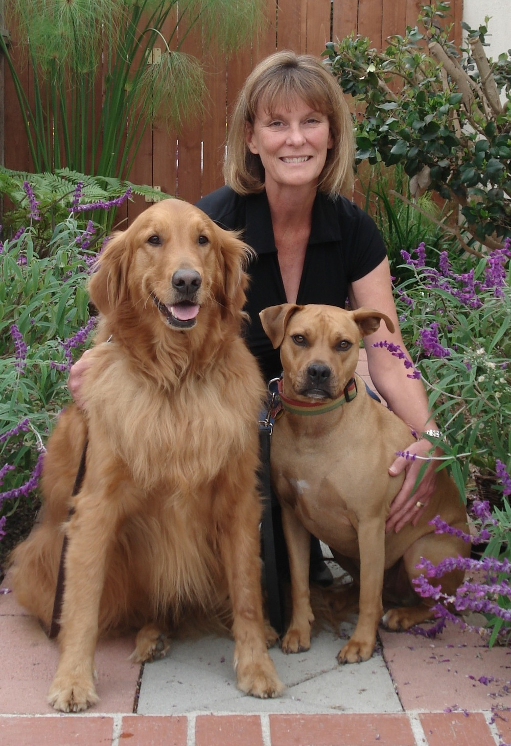 Betsy Calkins manhattan beach pit bull dog trainer, golden retriever dog trainer