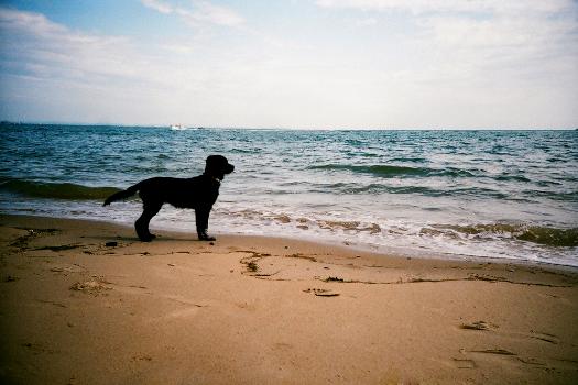 Best dog trainer redondo beach