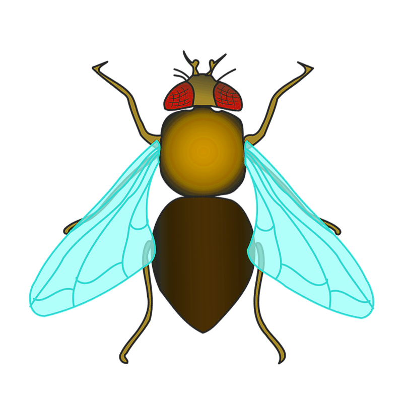 fly-147935_960_720_yellow.png