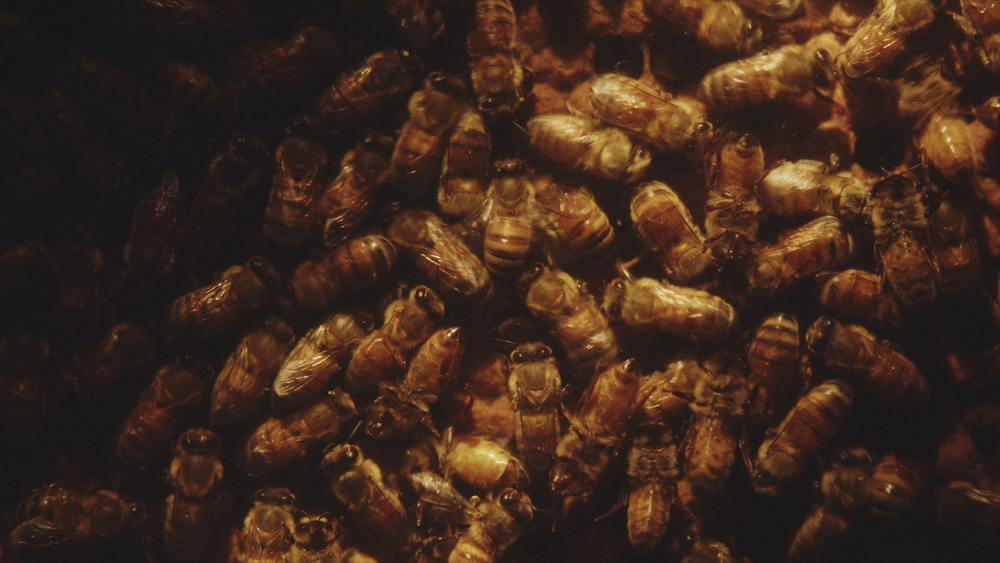 HONEYBEE ProRes 422 HQ Stereo_6.png