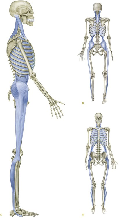 Anatomy Trains, The Lateral Line