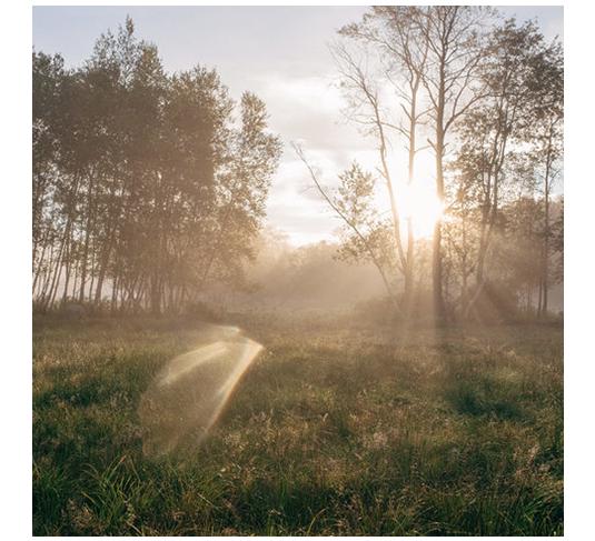 FSH_debruce_images_circle_11.png