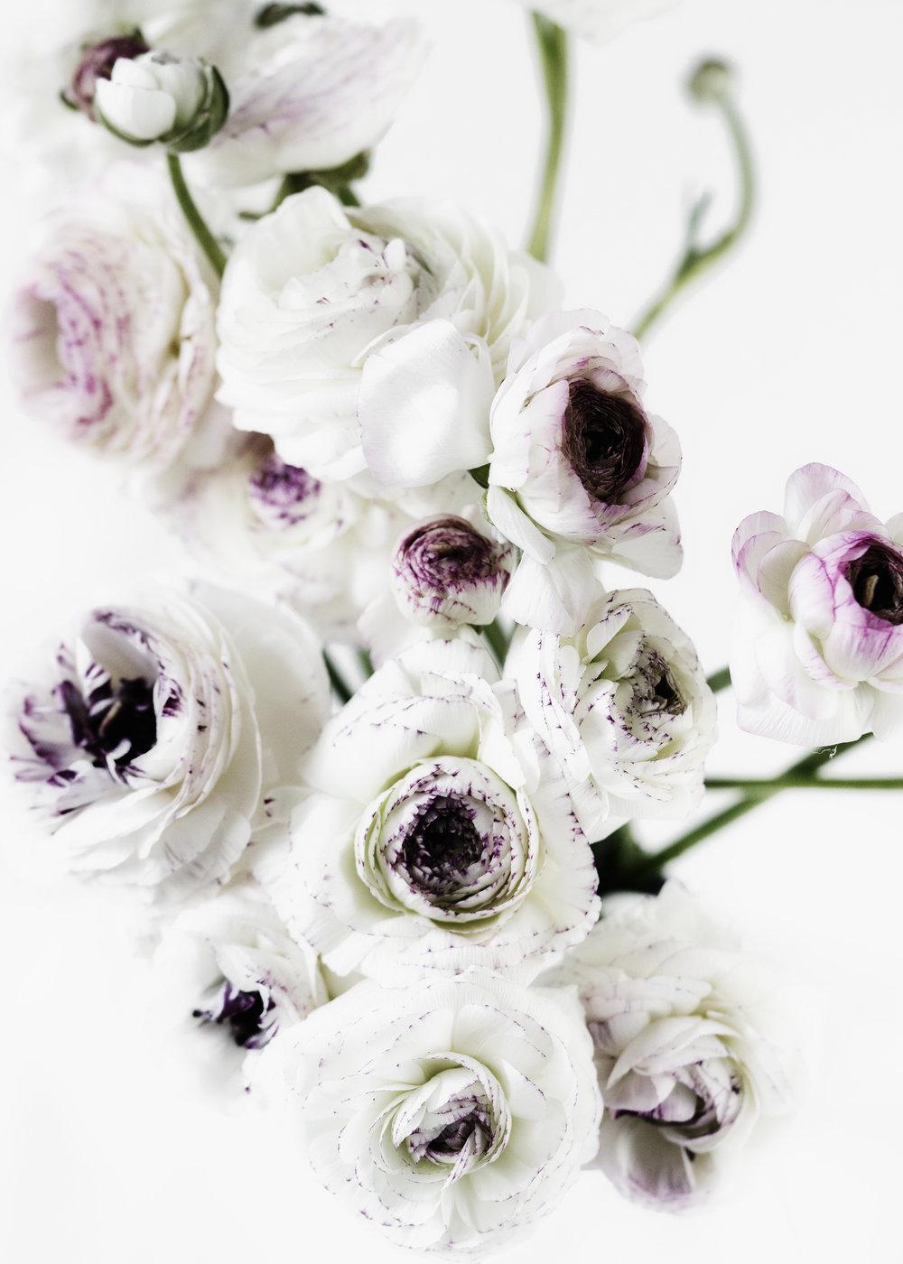 ranunculus light floral art_DSC0698.jpg