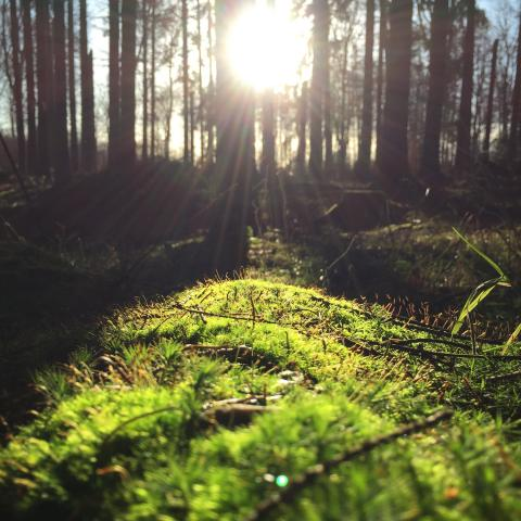 ayurvedic-spring-routines.jpg