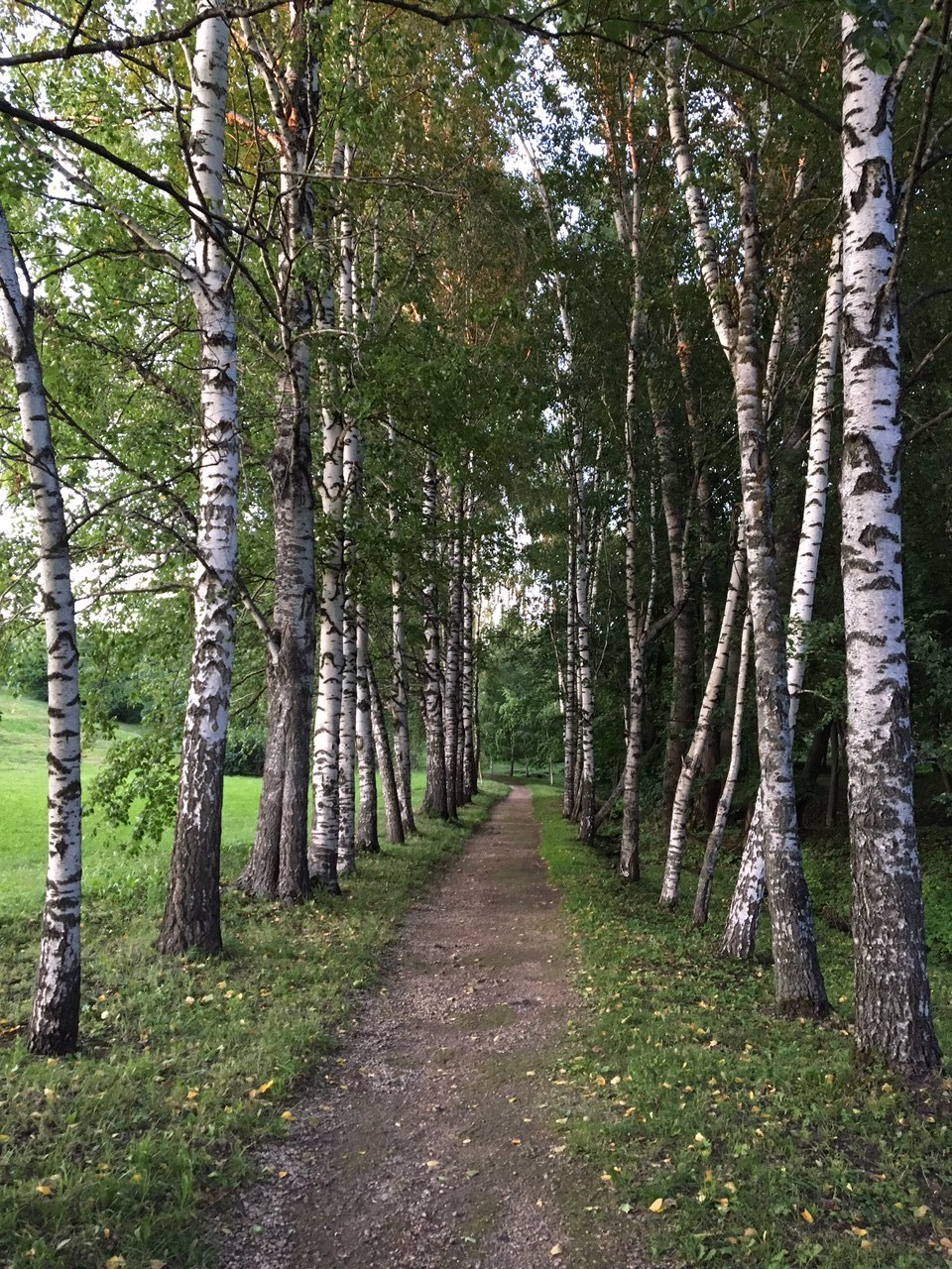 The birch trees alley is an example of the way many Russian noble manor houses and parks were built according to the principles of English garden. It was meant to look like it was all nature's work, but in fact was planned with great care.