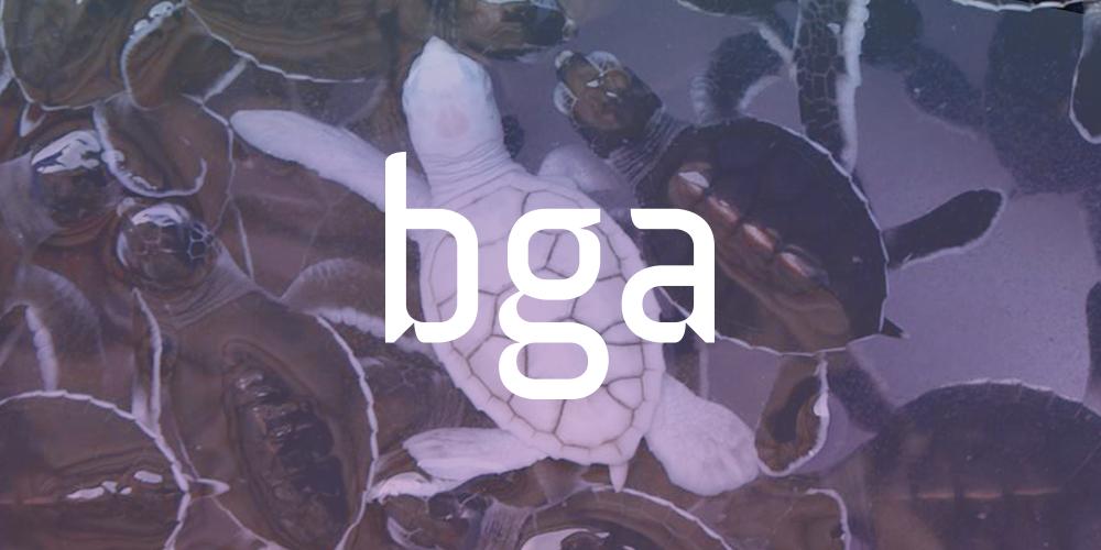 corporate_bga