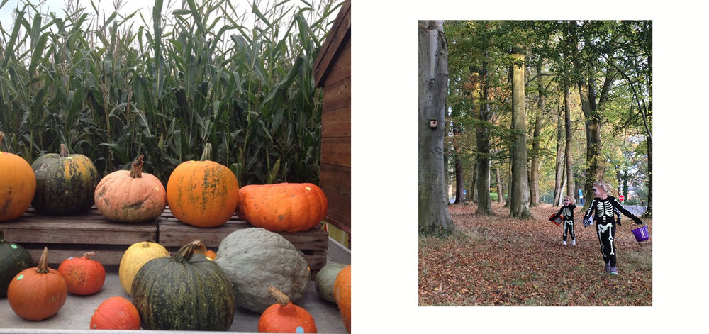 pumpkins  copy.jpg