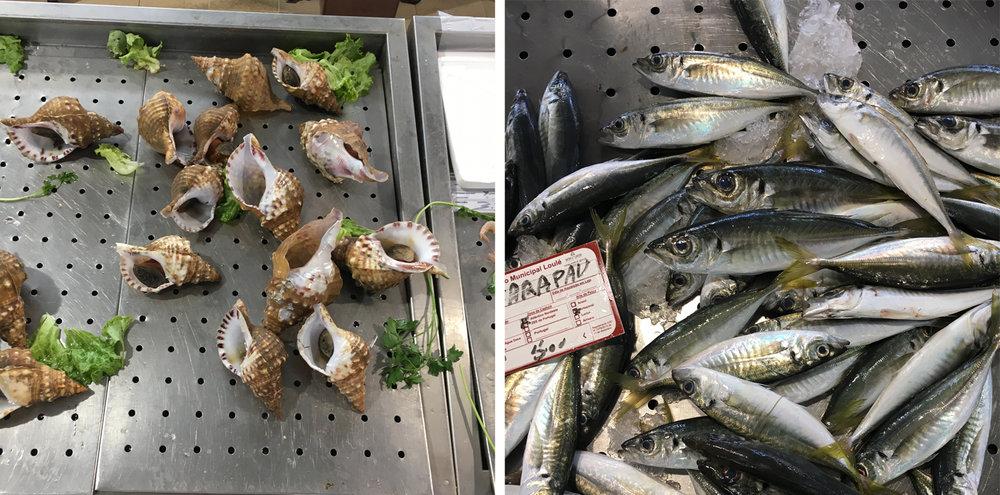shells and sardines .jpg