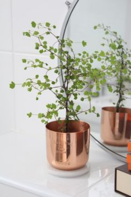 If you're feeling a little overwhelmed and don't really know where to start, this is a simple and classic way to literally incorporate some greenery in your home. Find a beautiful green plant and add it to a stylish copper pot. Perfect! Picture: sheerluxe.com