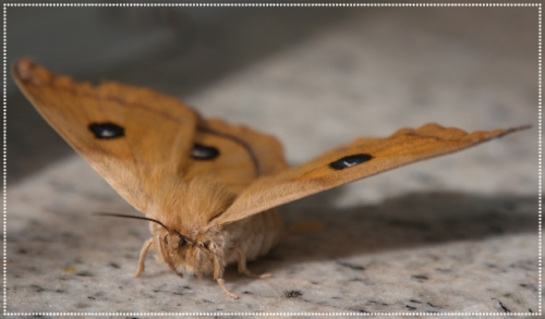 Moth 02.jpg