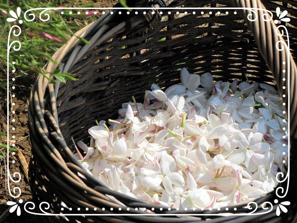 flower-2069140_1920.jpg