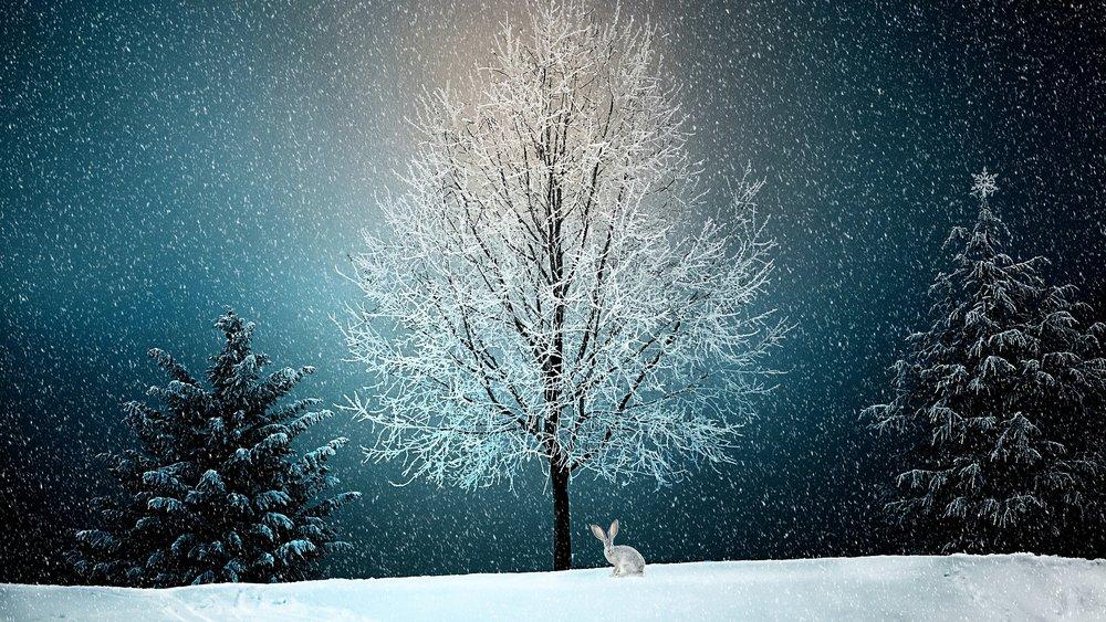 winter-2896970_1920.jpg