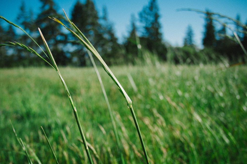 Frisch gemähtes Gras ist als Heu ein Rohstoff für Graspapier. Foto:  Paul Jarvis  auf  Unsplash .