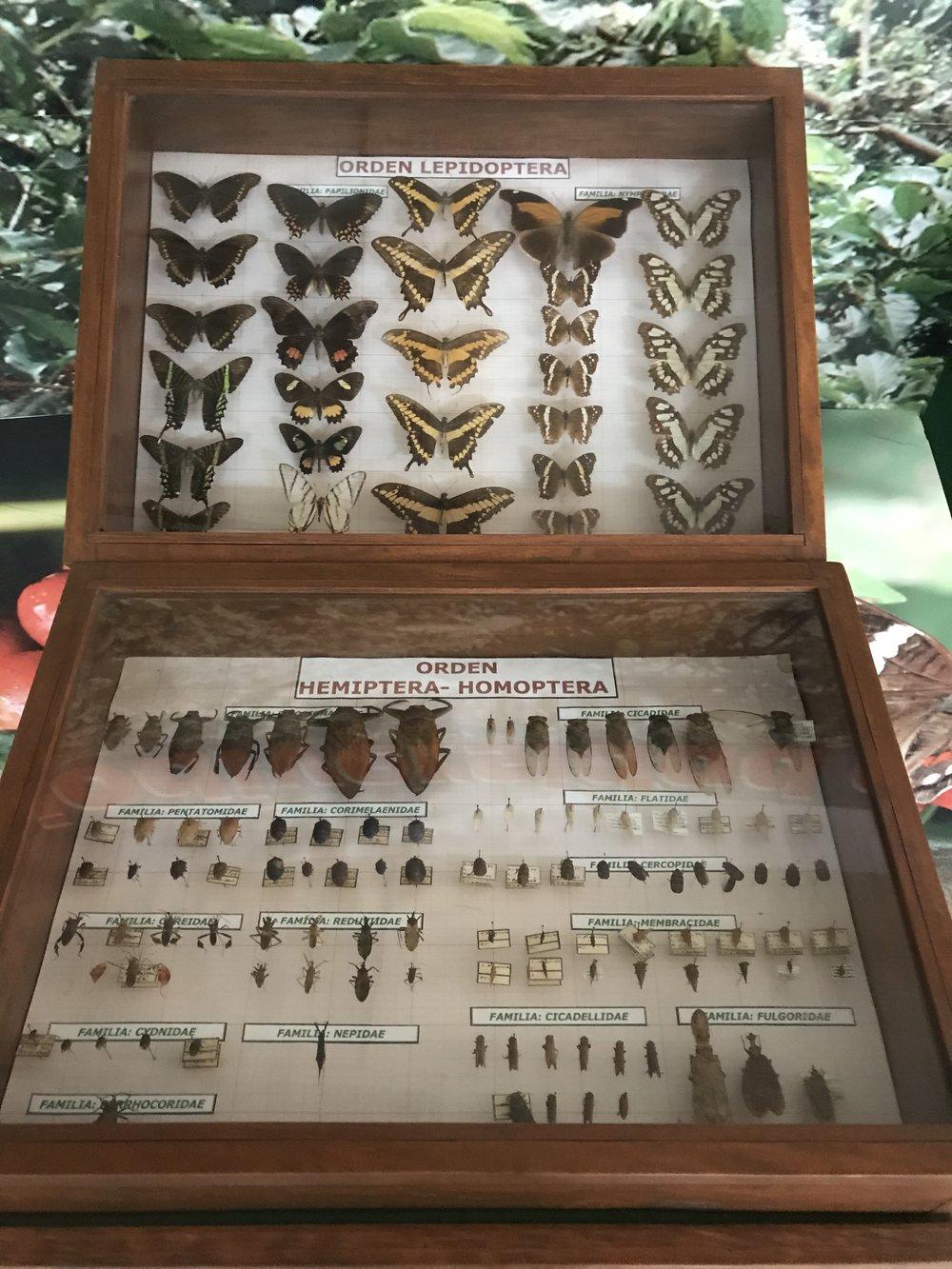Ein weiterer Kasten mit Käfern und Schmetterlingen. Foto: Noemi Gerhäusser für die © WEBER Packaging GmbH, 2019