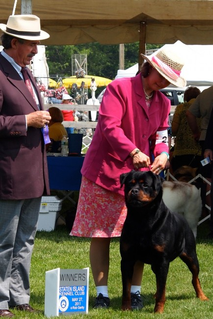 Herbie Takes Winner Dog At The Staten Island Kennel Club Show