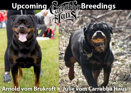 Carrabba_Breedings