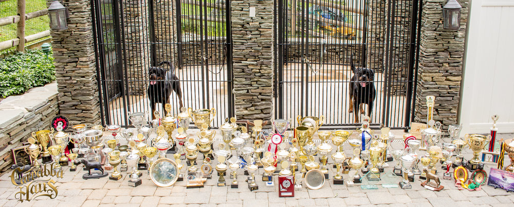 Our Kennel has won hundreds of awards on multiple continents. We are the only United States Kennel ever to take home 3 V1's  at the ADRK Klub Show in Germany.