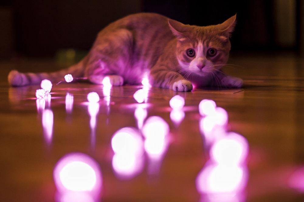CAT TAX