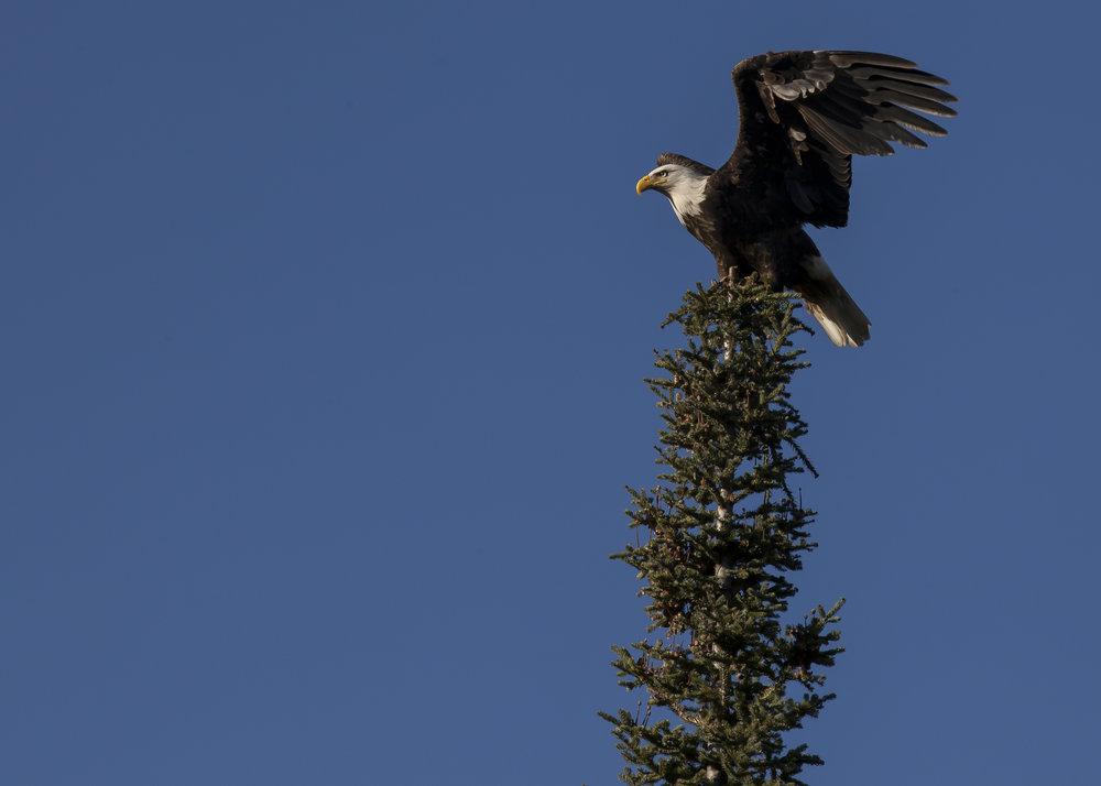 gage-fletcher-eagle1