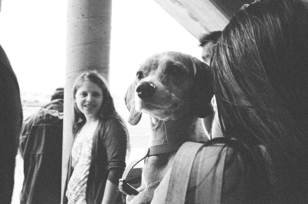 Puppy Portrait 1