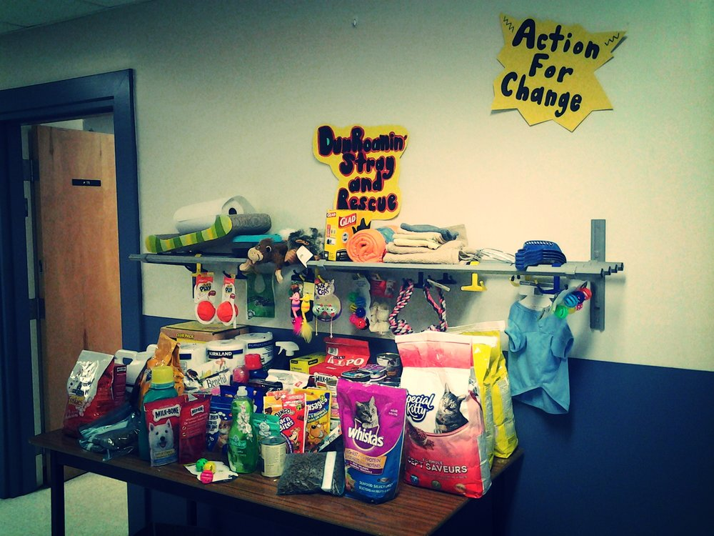 Dun Roamin Animal Shelter: Students in Kindergarten to grade 6 collected much needed items for a local animal shelter. Students announced their intentions by making morning announcements.  To be effective Global Citizens we must also look to our own communities. There is always a need somewhere and tapping into groups and organizations that work to fill those needs, allows us to see the what is possible in creating a sense of community.