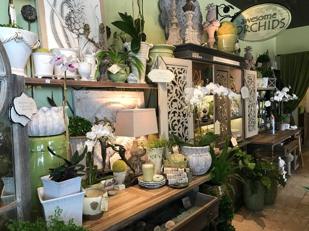 Awesome orchids plants pots more sarasota fl awesome orchids mightylinksfo
