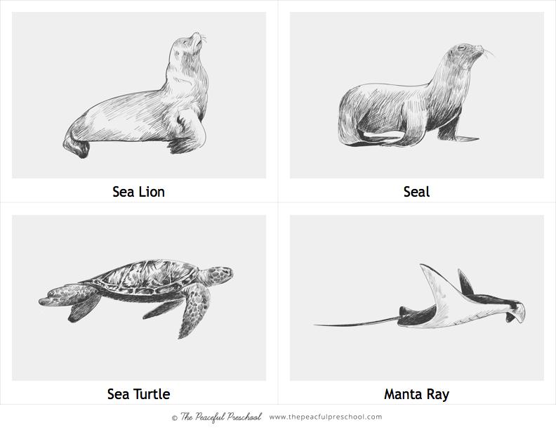 TPP Ocean Guide Sea Creatures 3.jpg