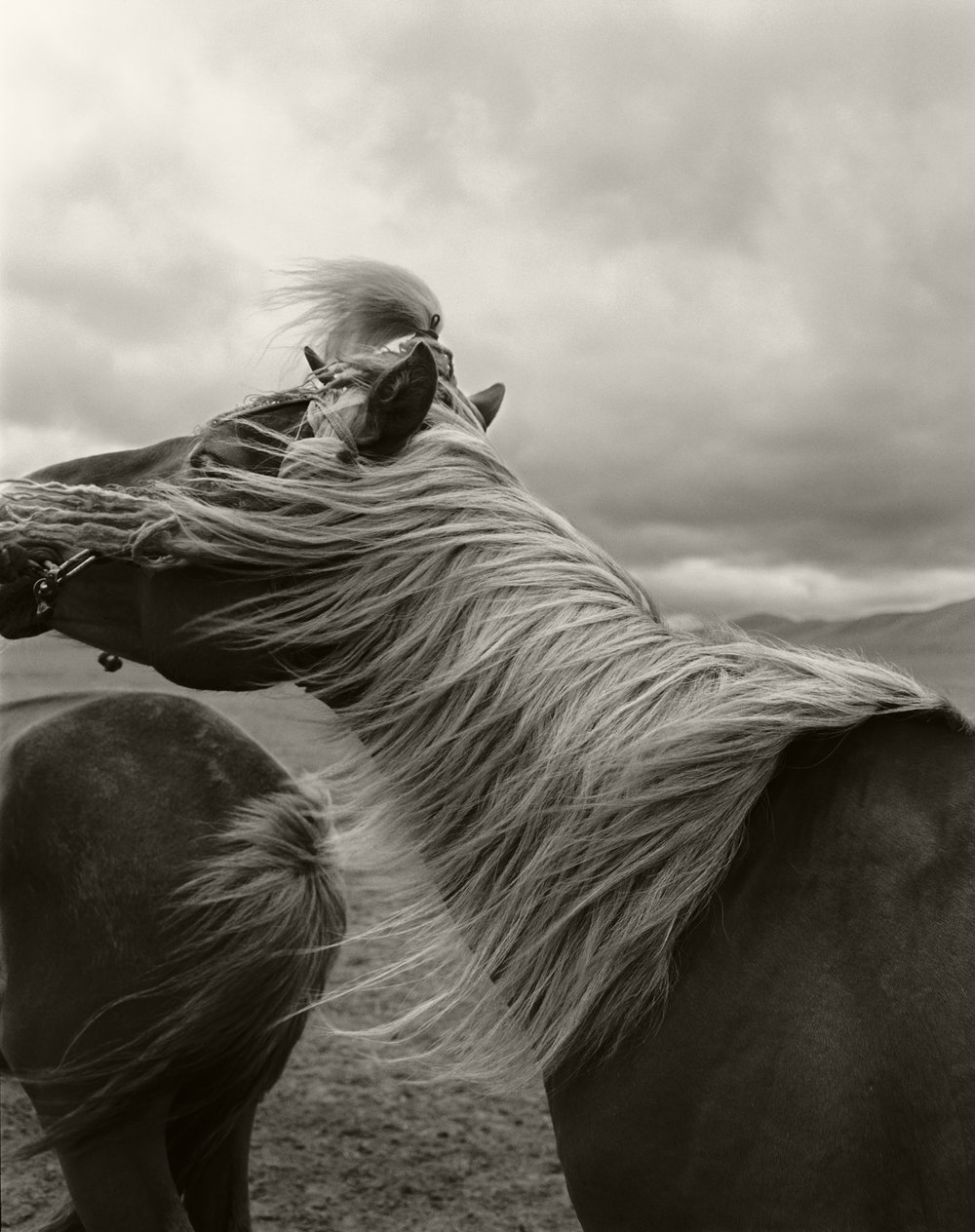 HORSE IN MONGOLIA