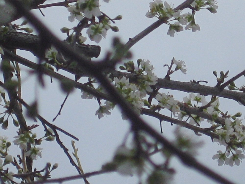 Close up of tree blossoms
