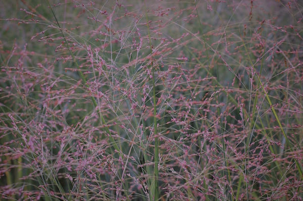 close up of tall grass and brush