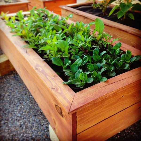 DIY Container Garden: How to Grow Food on Your Balcony, Rooftop, or ...