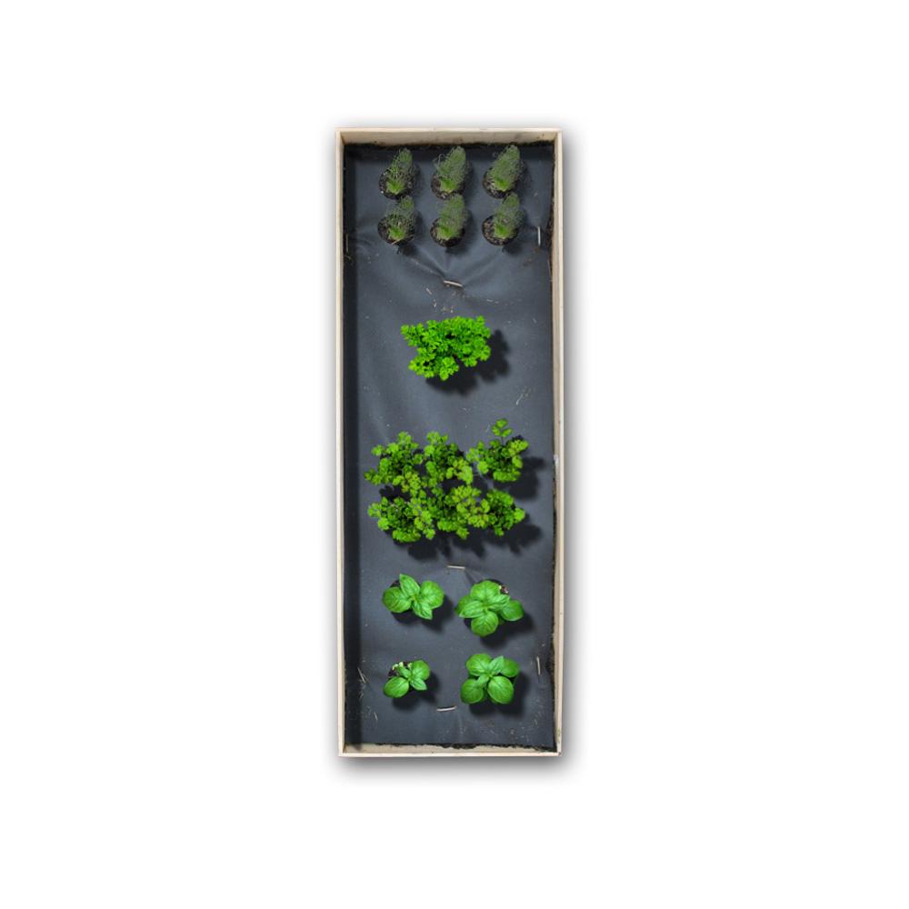 1 x 3 Herb Kit