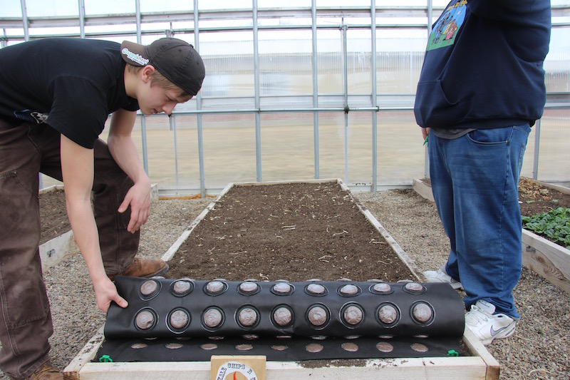 High school students plant their 12'x4' greenhouse Seedsheet of kale in 45 seconds.