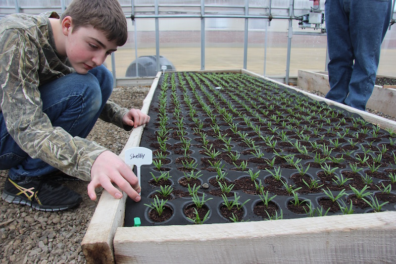 With 100% germination in the Seedsheet spinach bed, students label the different varieties to test growing qualities.