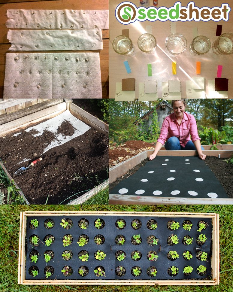 The evolution of Seedsheet: It started with paper towel, newspaper, & toilet paper, then had to be buried, then launched on Kickstarter, and now is ready to turn you into a gardening guru!
