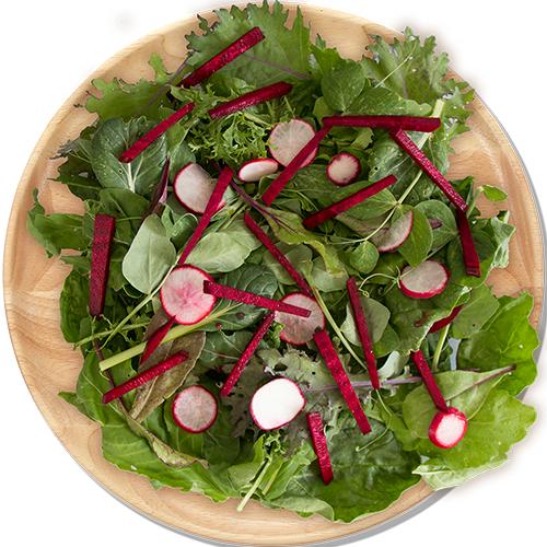 Salad_MealShot_500.png