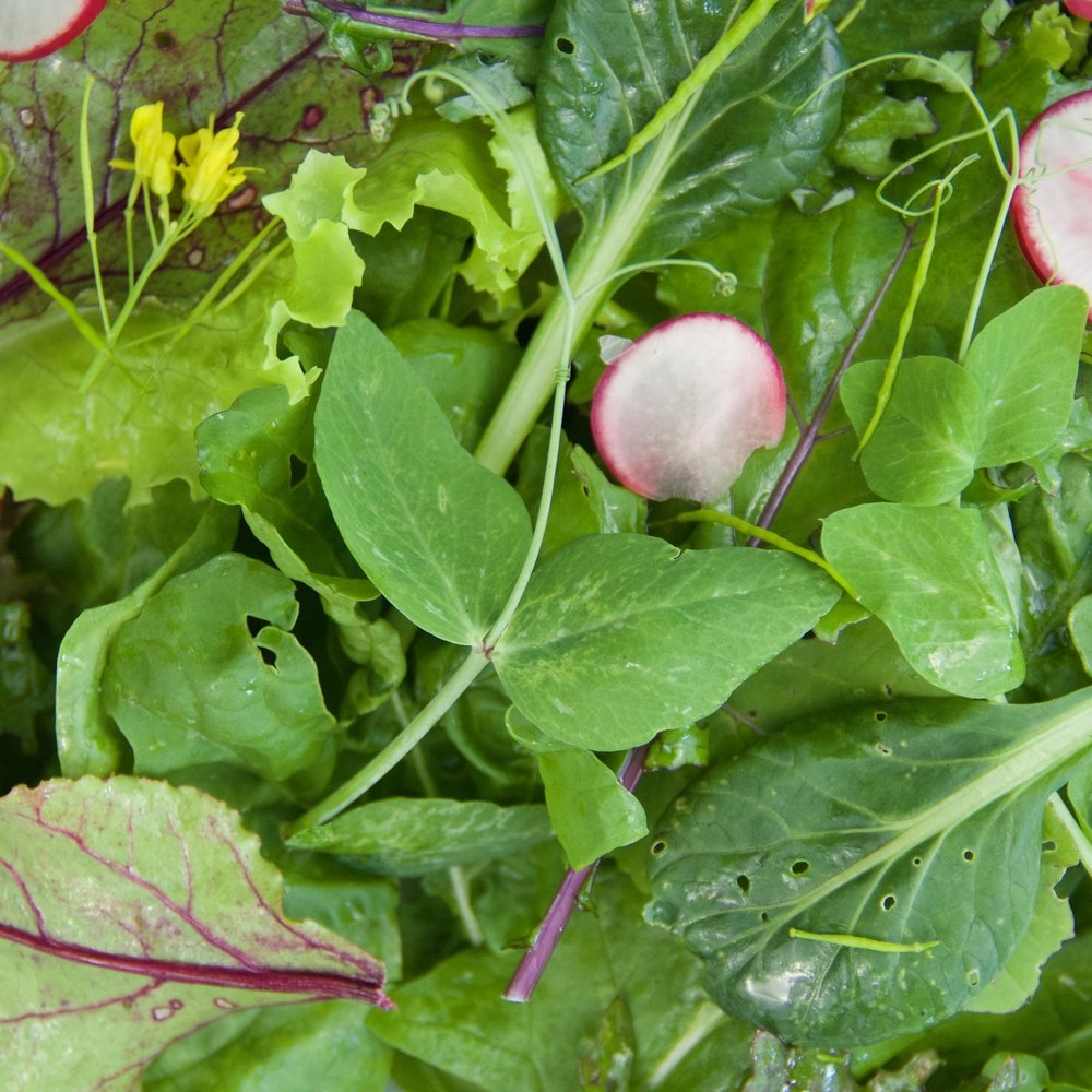 Salad (new) meal shots - 18.jpg