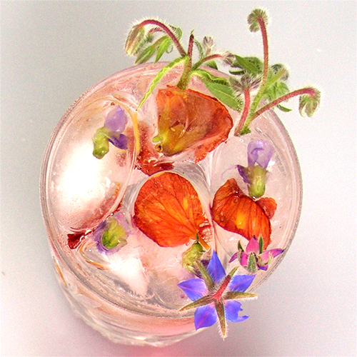 Cocktail_BorageFloralFizz_500.png