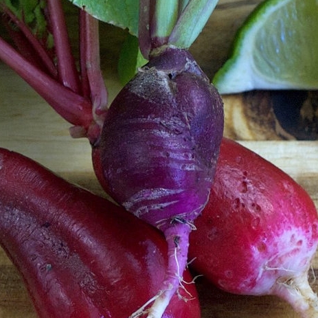 Purple Plum Radish