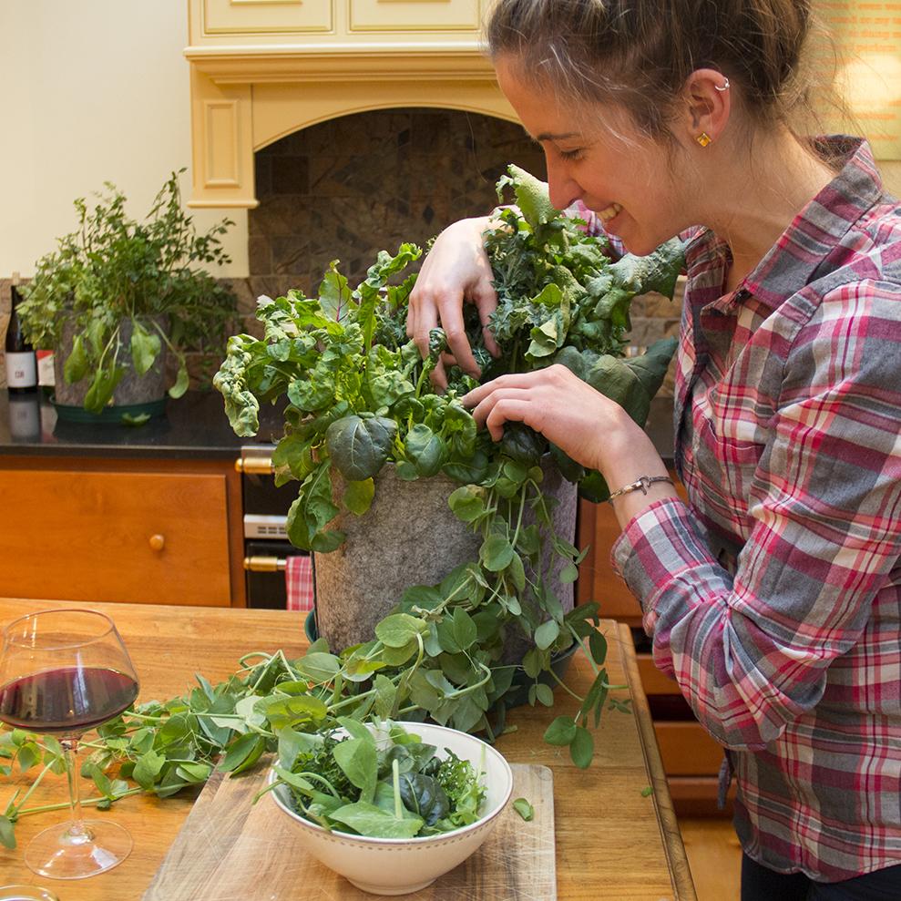 Salad_SideHarvest_SMALL.jpg