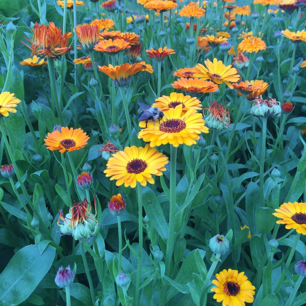 Pollinators Visiting