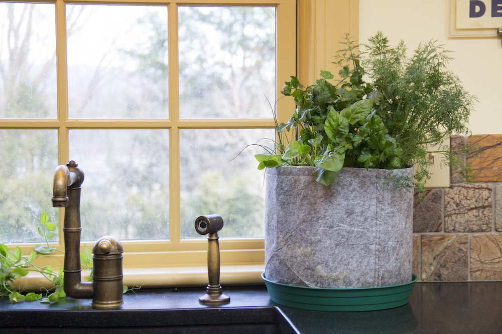 Fresh herbs by the sunny window for the fall.