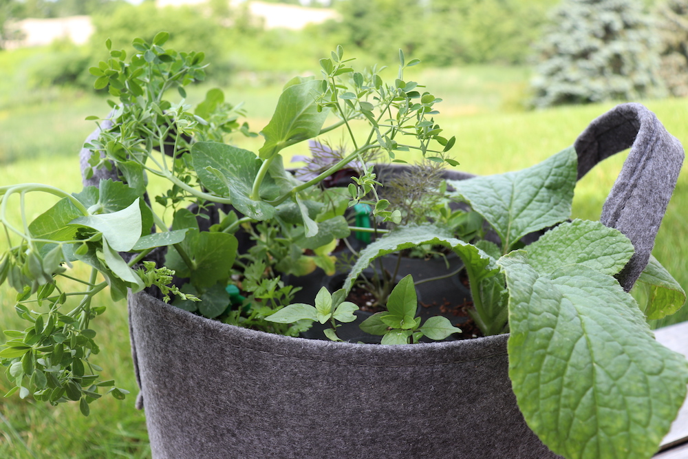How to Select the Best Seeds to Design Your Own Container Garden