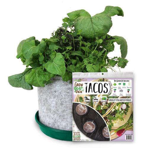 Grow Your Own Rainbow Tacos